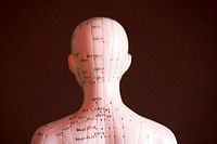Model doll, view from behind, detail, acupuncture points, red, meridians,   Series, meridian doll, meridian figure, teaching model, acupuncture model,...
