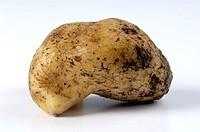 Potato, Solanum, tuberosum, indoor