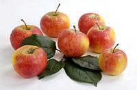 Apples, ´Gerlinde´, Malus, domesticus, indoor