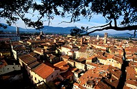 Italy, Tuscany, the city of Lucca, panoramic view from the Guinigi tower