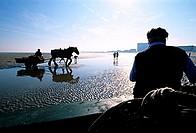 Belgium, West Flanders, shrimps fishermen on horses with their carriages on Oostduinkerke-Bad beach