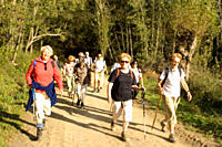 Group of senior hikers on nature trail