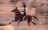 Rider, at, the, Pushkar, Festival, Rajasthan, India, asia, mammals, farm, animal, domestic, hoofed, animals, horses, Unpaarhufer, riding blurred-motio...