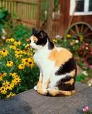 Domestic, Cat, tricoloured, tricolored, side