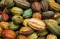 Cuba, cacaos, Theobroma cacao, Central America, cocoa-fruits, cacaos, beans, symbol, pleasure-means, growth, climate, food, agriculture,