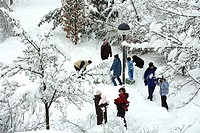 Parents, children, garden, snow, play, together, people men women, adults, friends, friendship, leisure time, season, winters, wintry, trees, shrubs, ...