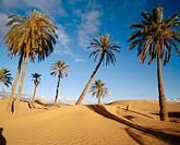 Desert. Tunisia.