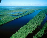 Archipelago of Anavilhanas at Amazon River, near Manaus. Brazil