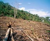 Deforestation in the rain forest. Amazon basin. Deforestation Peru.