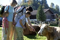 Family, hiking, vacation, vacation, mountain-village, meadow, cow, feeds,