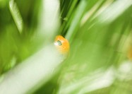 Ladybug in plant, extreme close-up