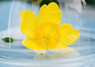 Flower in domed tray