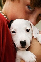 Close-up of a boy holding a Jack Russell Terrier puppy
