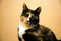Close-up of a cat looking at the camera