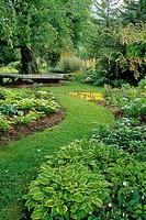 Hostas in perennial shade border under Betula pendula w/ grass path  (Hosta cv.; Betula pendula). Sunshine Farm, Renick, WV.