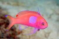 Close_up of fish swimming underwater