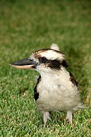 Close_up of bird in field