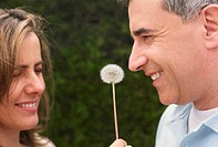 Close-up of a mid adult couple with a dandelion in between them