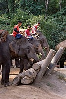 Travel, Thailand, Chiang Mai, Entertainment, Elephants, Working demonstration,