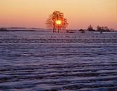 Winter sunrise. Central Poland