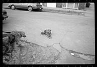 Dog on leash pursuing second dog sitting on street
