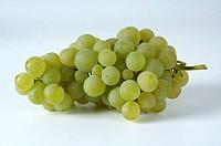 Grapes, ´Reichensteiner´, Vitis, vinifera,