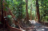 Tropical, rain, forest, Carara, national, park, Costa, Rica,