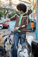 Young man walking dogs