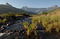 Stream passing through a field, Royal Natal National Park, North Drakensberg Mountain, Kwazulu-Natal, South Africa