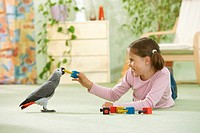 girl playing with Congo African Grey parrot - Psittacus erithacus