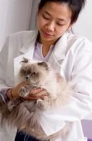 Veterinarian examing cat