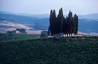 Castellina in Chianti, Tuscany, Italy Not available in CH