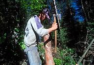 Lumberjack near Dasiko chorio guest house  Nestos river, Xanthi, Thrace, Greece