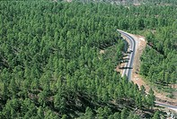 High angle view of a road passing through a forest, Honduras
