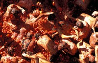 The Tomatina in Bunol