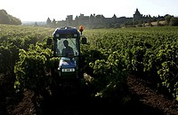 Carcassonne, a farmer is working with his tractor in the vineyards outside the walls of the medieval city