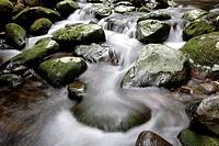Mangakara stream, Pirongia Forest Park, Waikato, New Zealand