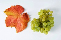 Green grapes, variety Bachus, with leaf