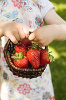 Child´s hands holding basket of fresh strawberries