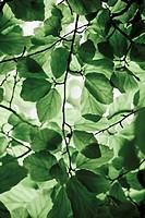 Leaves against sky