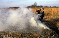 Overijssel, a reed cutter is burning waste in National Park the Weerribben