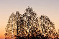 Sun rise skies, tulip poplar silhouettes and rising moon from the Foothills Parkway. Townsend, Tennessee, Appalachian, USA
