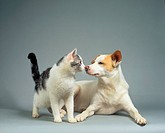 animal friendship : domestic cat and half breed dog