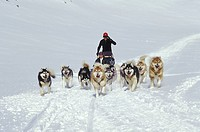 Young couple drive dogsled team across Meta Incognita Penninsula in early May, Baffin Island, Nunavut, Canada