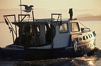 Crab harvesting boat with sea gull , Vancouver Island, British Columbia, Canada