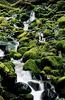Carmanah Valley rainforest creek drains through mossy rocks and logs, Vancouver Island, British Columbia, Canada