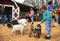 Young boy petting a goat in the petting zoo in Beacon Hill Park, Victoria, Vancouver Island, British Columbia, Canada