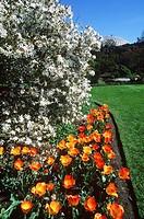 Queen Elizabeth Park, spring tulips, Vancouver, British Columbia, Canada