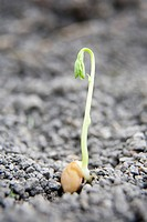 Seed on Gravel Sprouting