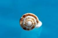 Sea shell, close-up